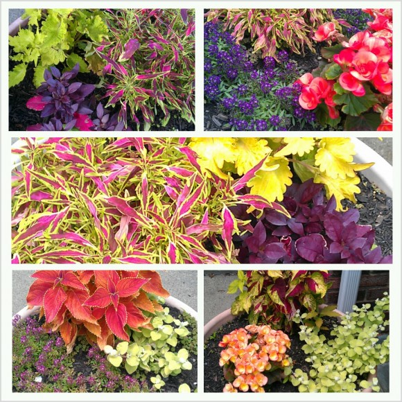 The plants and flowers I picked out this summer!
